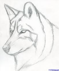 Easy pencil drawings for beginners. how to draw a wolf head, mexican wolf step 3 Easy Pencil Drawings, Pencil Drawings For Beginners, Pencil Drawing Tutorials, Cute Drawings, Drawing Sketches, Drawing Ideas, Simple Drawings, Face Sketch, Cool Wolf Drawings