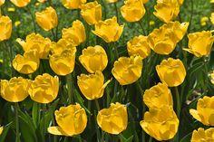 springtime Spring Time, Rose, Flowers, Plants, Floral, Roses, Plant, Royal Icing Flowers, Florals
