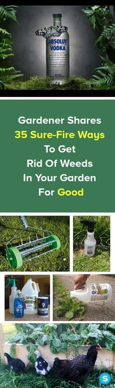 Are you currently dreaming regarding a potager kitchen garden? Learn exactly what a potager garden is, the best way to design your home kitchen garden with some more sample kitchenette PoTaGeR GaRdEn Tips And Tricks, All You Need Is, Mason Jars, Potager Garden, Diy Wall Shelves, How To Make Paper, Valentines Diy, Dollar Stores, Decorating Tips