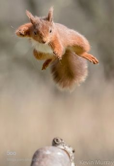 ninja squirrel displaying copious skillz...