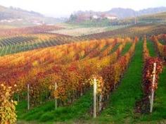 Vigneti forgiati come opere d'arte Paesaggi vitivinicoli inconfondibili - Piemonte Italy
