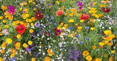 Face à l'inquiétante diminution des populations d'abeilles, nous avons tous les moyens d'agir. À commencer par ce que nous choisissons de planter dans notre jardin...