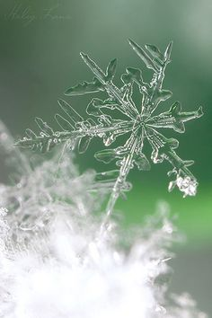 """Every piece of the universe, even the tiniest little snow crystal, matters somehow. I have a place in the pattern, and so do you.""  T.A. Barron (born 1952); writer"