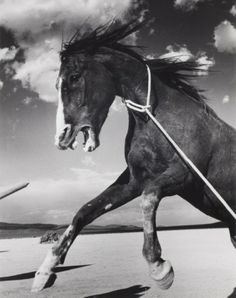 Ernst Haas • Mustang on the Set of the Misfits 1960 #2