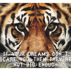 rather have the tiger roaring but i love the quote