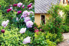 SÅ FÅR DU EN LEKFULL TRÄDGÅRD | Fluffiga pioner, slingrande stengångar och ett eget orangeri. Familjen Gisselssons trädgård är frodig och ombonad, en härlig blandning av skånsk allmogeträdgård och 1700-tal. För döttrarna Lovisa och Linnéa finns det gott om lekplatser och gömställen. Med stor omsorg och påhittighet har pappa Lennart skapat en gammaldags romantisk täppa för både barn och vuxna.