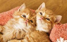 kittens5weeks-1761 by Elite Forces of Fuzzy Destruction, via Flickr