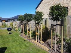 A lovely line of Portugal Laurel Stds,. recently planted at a stunning property in Central Otago! New Green, Lush Green, Central Otago, Big Tree, Landscaping Plants, Portuguese, Evergreen, New Zealand, Portugal