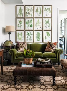 Love the green velvet sofa | brown and green | botanical prints | ferns | brown…