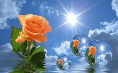 Diamond Painting, EdC DIY Life Dream Rose Flower Beach Valley Wolf Fruit Crystal Rhinestone Embroidery Paintings Picture Art Craft Stitch for Home Wall Decor Living Room Bedroom Full Drill Kits (F) Night Pictures, Free Pictures, Free Images, Peach Orange, Orange Roses, Tantra, New Good Night Images, Step By Step Painting, 5d Diamond Painting