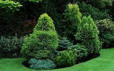 Хвойные растения для сада – идеальный вид в любое время года
