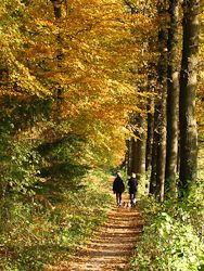 Om, Fall, Tips, Plants, Autumn, Fall Season, Planters, Plant, Planting