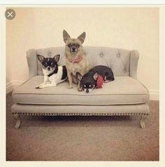 Sofa bed pet, sofa dog