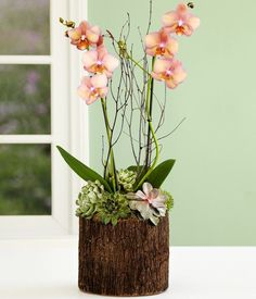 potted orchid centerpieces wedding - Google Search