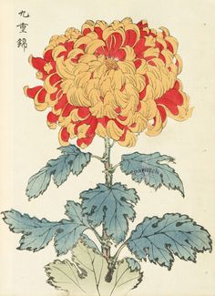 Chrysanthemum -- Asian and Oriental Art -- RHS Prints Chrysanthemum Drawing, Japanese Chrysanthemum, Chrysanthemum Flower, Japanese Flowers, Art And Illustration, Illustration Botanique, Art Asiatique, Poster Art, Japanese Painting
