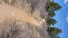 Trail Running Tips for Newbies