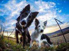 to my favorite photo of Envy and Zain ❤ ⬇️ Would you like to wear border collie Lovers T-Shirts or hoodie ? Sweet Dogs, Cute Dogs, Dog Tumblr, Collie Dog, Tier Fotos, Mundo Animal, Dog Care, Dressage, Dog Pictures