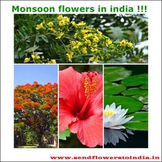 Enjoy the rains with the beauty of #flowers!