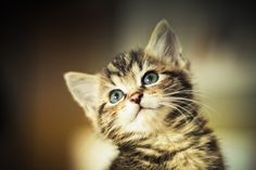 Kitten by David Herreman on 500px