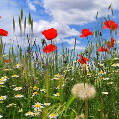 Primavera.... #madrid #places#lugares #spring #primavera #Color #snapseed #HuaweiP20Pro @huaweimobileesp #sky #cielo #campo #flowers #flores