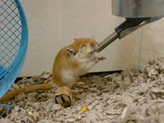 Peppy was a friendly gerbil who got left all alone in the back of the pet store because he was born blind. | The Heartwarming Story Of A Blind Gerbil's Quest For Friendship