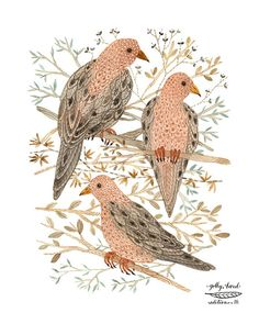 mourning doves bird art print by GollyBard on Etsy
