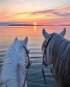 Baby Horses, Cute Horses, Pretty Horses, Horse Love, Cute Horse Pictures, Horse Photos, Beautiful Horse Pictures, Most Beautiful Horses, Animals Beautiful