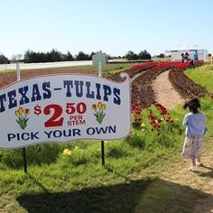 Texas-Tulips - Pilot Point, TX, United States. $2.50 per tulip. Choose wisely :)