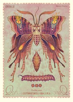Lepidoptera Obscuramoth, An Animated Illustration Series of Imaginary Moth and Butterfly Species Vintage Butterfly, Butterfly Art, Butterflies, Botanical Illustration, Digital Illustration, Art Papillon, Butterfly Species, Moda Blog, Affinity Designer