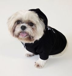 PUPPY AT HEART dog's zip hoodie at itraits.com. Baby looks like a puppy, but he is an old soul. Baby is a sweetheart.