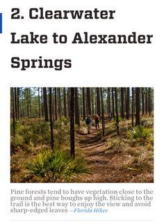 Hiking in Florida