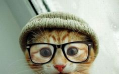 Hipster cat is hipster