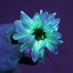Various methods for making your own glowing flowers.