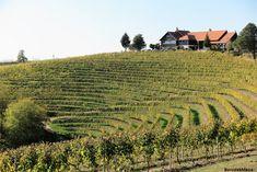 Bortúra a szlovén Jeruzalemben - BorvidékMánia Sauvignon Blanc, Pinot Noir, Vineyard, Marvel, Outdoor, Outdoors, Vine Yard, Vineyard Vines, Outdoor Games