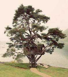 A treehouse!