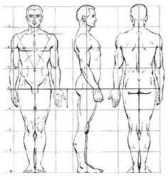 proportions.du corp - Recherche Google