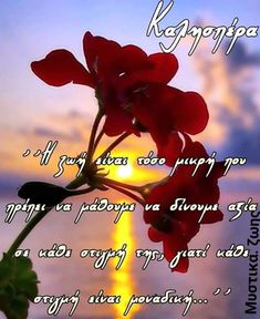 Greek Quotes, Life Quotes, Wallpaper, Plants, Poster, Gifts, Finger Food, Quotes About Life, Quote Life