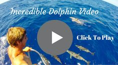 Incredible Dolphin Video. Dolphins Playing Off The Bow Of A Sailboat