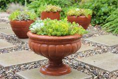Make your succulent planters look fuller instantly | Jennifer's Mentionables