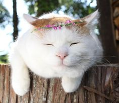 Sleepy Dahlia… she is as sweet as can be!