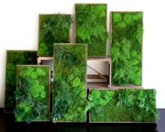 RR-16-16 Our fames can be made any size and any shape, with many beautiful plants to choose from