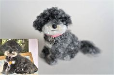 This is Samee, a #Havanese that looks like a #poodle . Felted by me, with acrylic #fibers, #wool core, plastic eyes, #polymerclay nose, wires, ribbon and charm. #janetsneedlefelting #pet #Dogportrait #dog memorial#arts#crafts#miniature#wool#polymer clay#sculpture#handmade