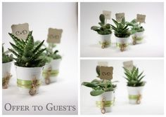 favors that are also part of the wedding decor (we pot and wrap with red ribbon in cheap white or silver pots)
