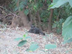 a new cat who wandered in to the colony very hungry, then after eating just relaxed and watched the other cats. Feral Cats, Very Hungry, Just Relax, Humane Society, Fundraising, Animals, Animales, Animaux, Animal