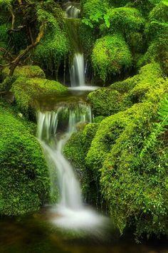 Lush Green Waterfalls!
