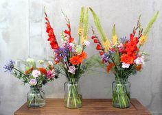 Mis flores en casa - Agosto 2016