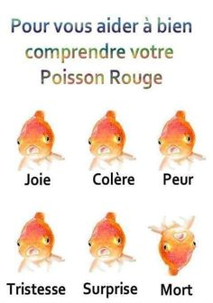 #VDR #DROLE #HUMOUR #FUN #RIRE #OMG French Puns, Rage Comic, Classroom Memes, Image Fun, Good Jokes, Funny Posts, Funny Cute, I Laughed, Funny Animals