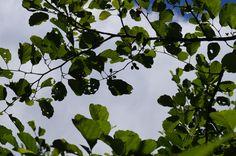 sky between branches