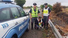 La polizia salva un cucciolo abbandonato - http://www.sostenitori.info/la-polizia-salva-un-cucciolo-abbandonato/251604