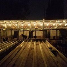 Brood pen  are up. I had an idea to power them with solar power. And thank god for the  because it worked. #solarpower#Renogy#BreedingSeason#gallero#FuckSoCalEdison#12v#120V#L.E.D#thinkoutsidethebox#Tesla#broods#California#Guanajuato#Jalisco#Nayarit#Michoacan#Durango#Sonora#Zacatecas#Sabong#harvestthesun#Sol#Grana2#InlandEmpire#
